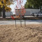 Stone Creek Landscape & Nursery, Inc. Taco John's and Kohl's Projects